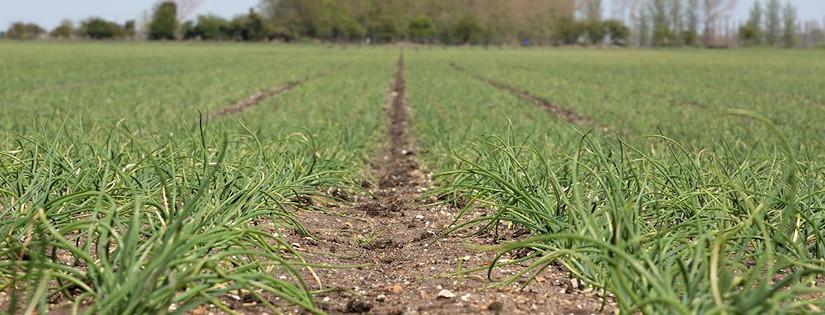 bisnis pertanian